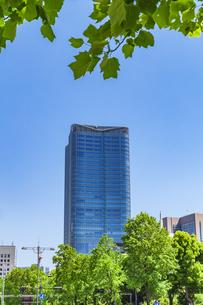 新緑の木立と高層ビルの写真素材 [FYI04498393]