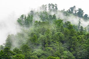 霧の山並みの写真素材 [FYI04498898]