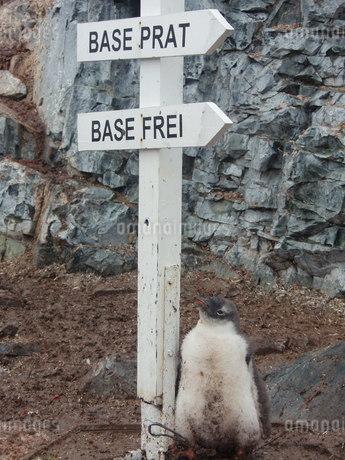 南極の風景の写真素材 [FYI04498925]