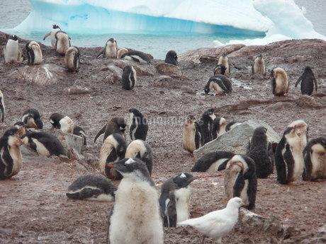 南極の風景の写真素材 [FYI04498926]