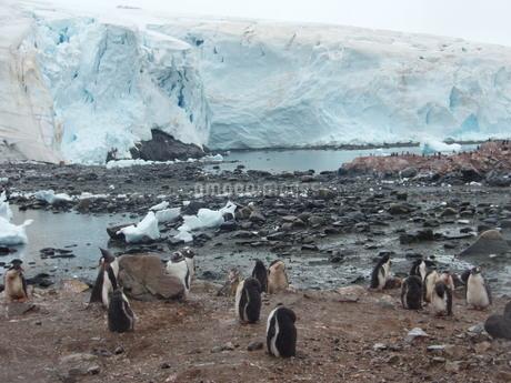 南極の風景の写真素材 [FYI04498927]