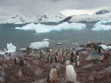 南極の風景の写真素材 [FYI04498928]