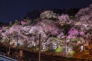 ライトアップの梅林 水戸偕楽園の写真素材 [FYI04499101]