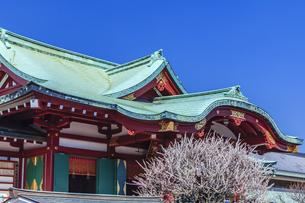 梅の花咲く亀戸天神の写真素材 [FYI04499102]