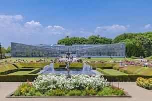 バラ咲く神代植物園 東京の写真素材 [FYI04499111]