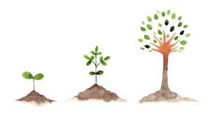 木の成長セット水彩画のイラスト素材 [FYI04499182]