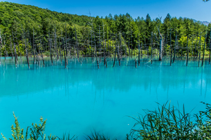 北海道美瑛町の青い池 夏 七月の写真素材 [FYI04499497]