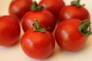 プチトマトの写真素材 [FYI04499514]