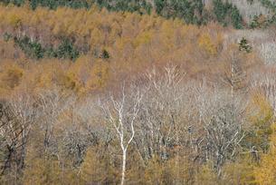 高原の秋の写真素材 [FYI04499684]