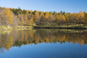 秋 高原の池の写真素材 [FYI04499688]