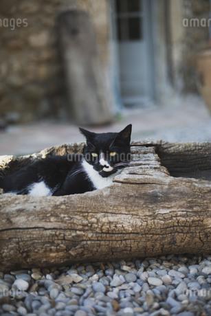 くり抜かれた古い木の中でくつろぐ黒と白の猫の写真素材 [FYI04500429]
