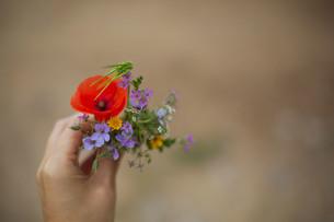 小さな花束の写真素材 [FYI04500459]