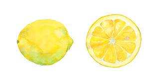 レモン水彩画のイラスト素材 [FYI04500461]