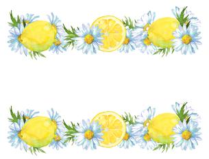レモンとマーガレットのフレームのイラスト素材 [FYI04500462]