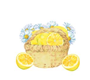 レモンとマーガレットと籠のイラスト素材 [FYI04500463]