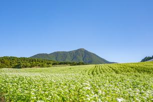 ソバの花咲く高原の写真素材 [FYI04500897]