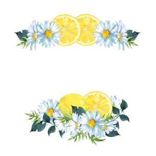 レモンとマーガレット水彩画のイラスト素材 [FYI04501331]