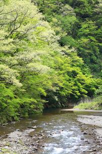 新緑の芽吹きがきれいな渓谷の春の写真素材 [FYI04502092]