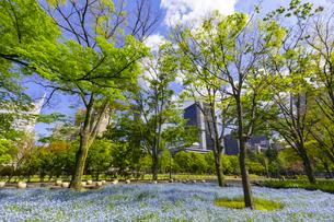 春の日比谷公園の写真素材 [FYI04502127]