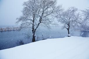 冬 雪の余呉湖の写真素材 [FYI04502258]