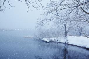 冬 雪の余呉湖の写真素材 [FYI04502260]
