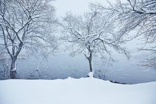 冬 雪の余呉湖の写真素材 [FYI04502265]