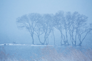 冬 雪の湖北水鳥公園の写真素材 [FYI04502276]