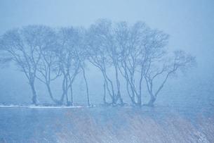 冬 雪の湖北水鳥公園の写真素材 [FYI04502277]