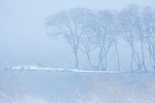 冬 雪の湖北水鳥公園の写真素材 [FYI04502279]