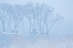 冬 雪の湖北水鳥公園の写真素材 [FYI04502280]