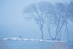 冬 雪の湖北水鳥公園の写真素材 [FYI04502281]
