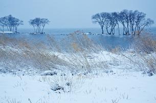 冬 雪の湖北水鳥公園の写真素材 [FYI04502292]