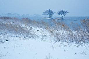 冬 雪の湖北水鳥公園の写真素材 [FYI04502293]