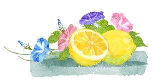 レモンと朝顔水彩画のイラスト素材 [FYI04502303]