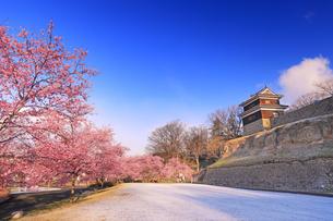 朝の新雪の桜並木と西櫓の写真素材 [FYI04502584]