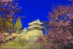薄暮の南櫓と桜のライトアップの写真素材 [FYI04502586]