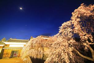 東虎口櫓門と桜のライトアップと三日月の写真素材 [FYI04502724]