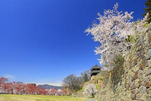 西櫓と桜並木の写真素材 [FYI04502743]