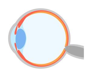 目の断面図のイラスト素材 [FYI04502756]