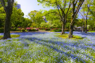 花咲く春の日比谷公園の写真素材 [FYI04502833]