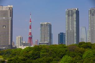 東京タワーと高層ビル群と浜離宮恩賜庭園の森の写真素材 [FYI04502849]