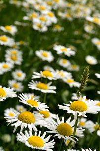 花畑の写真素材 [FYI04503786]