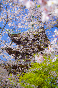 満開の桜と旧寛永寺・五重塔の写真素材 [FYI04503886]