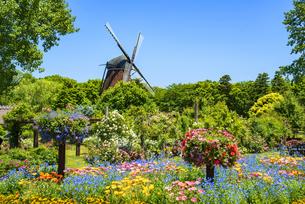 アンデルセン公園 春の花咲き誇る庭園と風車の写真素材 [FYI04504092]
