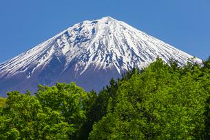 初夏の富士山の写真素材 [FYI04504109]