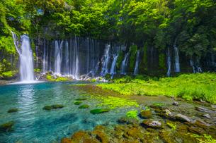 清廉な白糸の滝の写真素材 [FYI04504111]