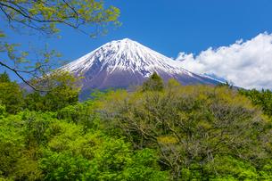 初夏の富士山の写真素材 [FYI04504118]
