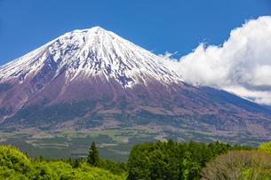 初夏の富士山の写真素材 [FYI04504119]