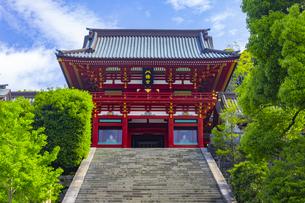 鶴岡八幡宮の本宮の写真素材 [FYI04504134]