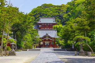 新緑の鶴岡八幡宮の写真素材 [FYI04504140]